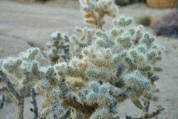 Looks like Cactus Plants Photo