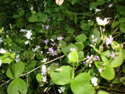 Plants and White and Purple Flowers Photo