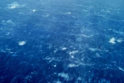Sea surface as observed during Hurricane Caroline. Photo