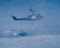 NOAA Bell UH-1M helicopter getting in position to weigh sedated polar bear. Photo