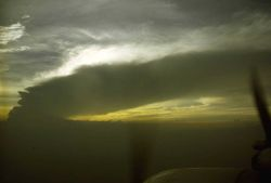 In Tropical Storm Dawn Photo