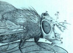 Detail of image of a blue fly Photo