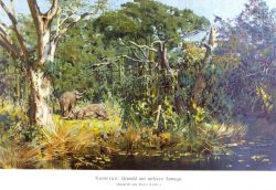 Cameroon German colony - a view of elephants in the forest Photo