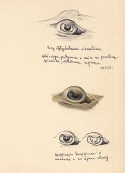 Eye of a stingray Photo