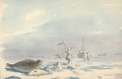 Seal hunters on the Arctic ice. Photo