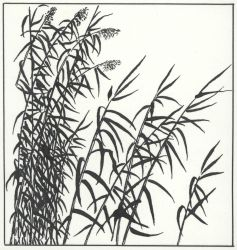 Pen and ink drawing of marsh grass Photo