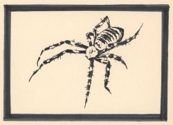 Pen and ink drawing of a spider Photo