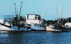 Shrimp boats at Cameron Photo