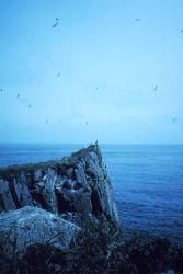 Promontory on Sutwik Island in Shelikof Strait. Photo