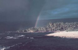 A rainbow over palm trees on the coast Photo