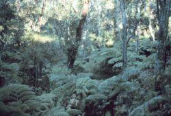 A nature trail near Thurston Lava Tube Photo