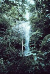 Waterfall on Kauai seen through the rain forest Photo