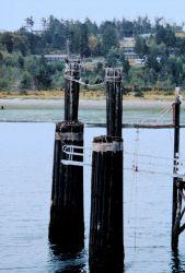 A Puget Sound ferry landing Photo