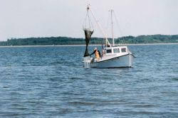 Clam dredging - although maintaining the tradition of the Chesapeake waterman, this harvesting method further stresses submerged aquatic vegetation. Photo