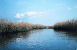 Canoeists exploring a marsh Photo