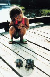 Juvenile human inspecting juvenile alligator snapping turtles. Photo