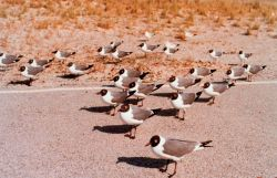 A flock of sea gulls taking it easy Photo