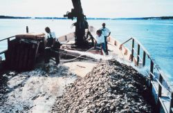A firehose is employed by the Captain of the ROBERT LEE to spread oyster spat reared by the Oyster Recovery Partnership. Photo