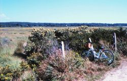Great Sippewissett Marsh, West Falmouth Photo
