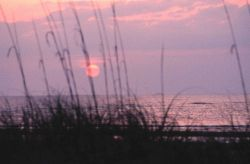 Sunrise as seen through the sea oats at Nannygoat Beach. Photo