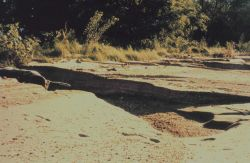 Erosion damage to a beach near Baltimore as a result of Hurricane Floyd. Photo