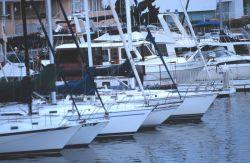 The harbor at Santa Barbara Photo