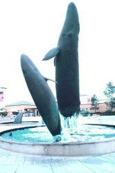 Whale sculptures grace the fountain at the Birch Aquarium Photo
