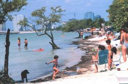 Key Biscayne Beach on the bay side of the island Photo