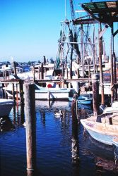 Shrimp, snapper, grouper, and stone crab fishing boats at A Photo