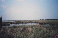 Broken marsh in Barataria Basin just west of the levee Photo