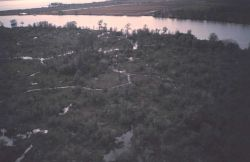 Cypress marsh at the edge of Lake Ponchartrain as seen from the air. Photo