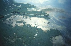 Aerial view of interior Mississippi Delta marshes Photo
