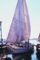 Sailing oyster dredgers drying their sails alongside the dock. Photo
