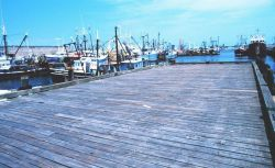 New Bedford fishing boats. Photo