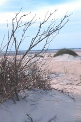 Wind-swept dunes near the abandoned Coast Guard Station Photo