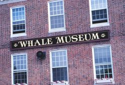 The Whale Museum Photo