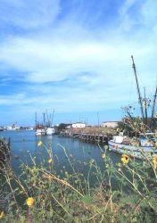 Shrimp boats and sunflowers Photo
