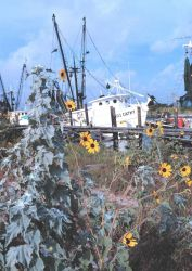 Shrimp boats and sunflowers at Conn Brown Harbor Photo