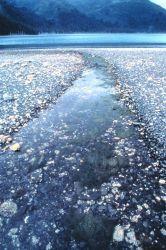 Intertidal area Photo