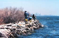 Volunteers helping clean up the wetlands and waterfront area around Fort McHenry in Baltimore Harbor Photo
