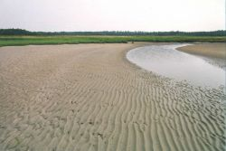 Tidal stream at low tide showing parallel ripple pattern in deeper areas versus hummocky pattern in shallower areas Photo