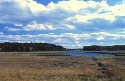 A view of wetlands at Great Bay National Estuarine Research Reserve. Photo