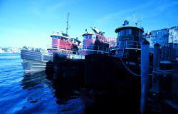 Portsmouth Harbor tugboats. Photo