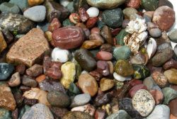 Random rocks and barnacle picked up on the beach at Gig Harbor. Photo