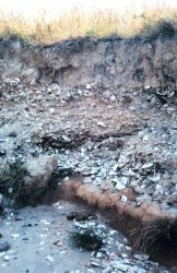 Eroded cliffs along the Tred Avon River reveal buried piles of oyster shells. Photo