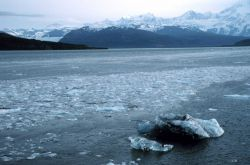 Bergy bits and small glacial ice chunks along tide rip line in Icy Bay. Photo