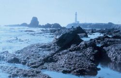 Pigeon Point Lighthouse as seen from the south at low tide on a misty day. Photo