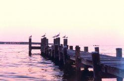 Gulls on a pier at sunset. Photo