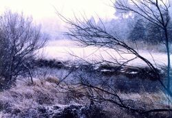 A snowy winter day in the marsh. Photo