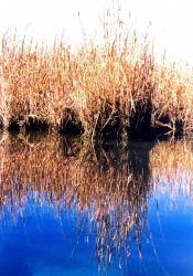 Reflections of a Patuxent River marsh. Photo